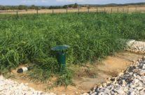Réalisation d'une Station d'épuration par filtres plantés de roseaux de 200 EH extensible à 266 EH à Mauressargues